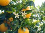 portakalsb